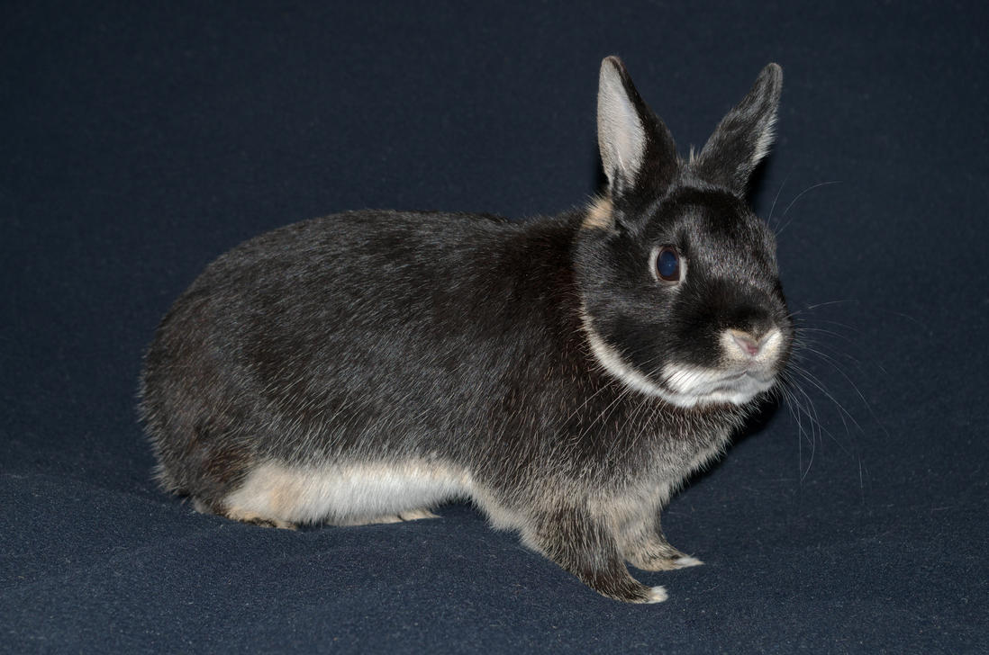 Ignaz Bunny Stock by Burtn
