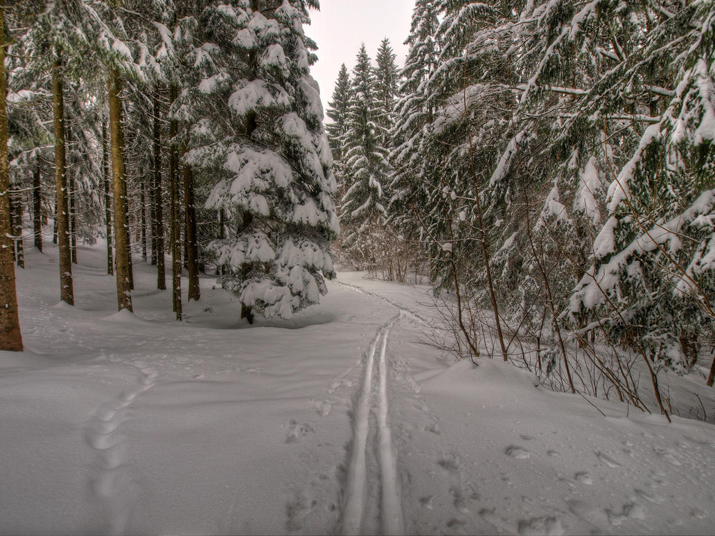 Romantic Ski Track by Burtn