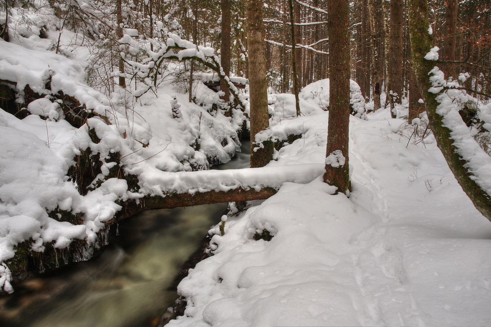 Deep Forest Winterscape by Burtn