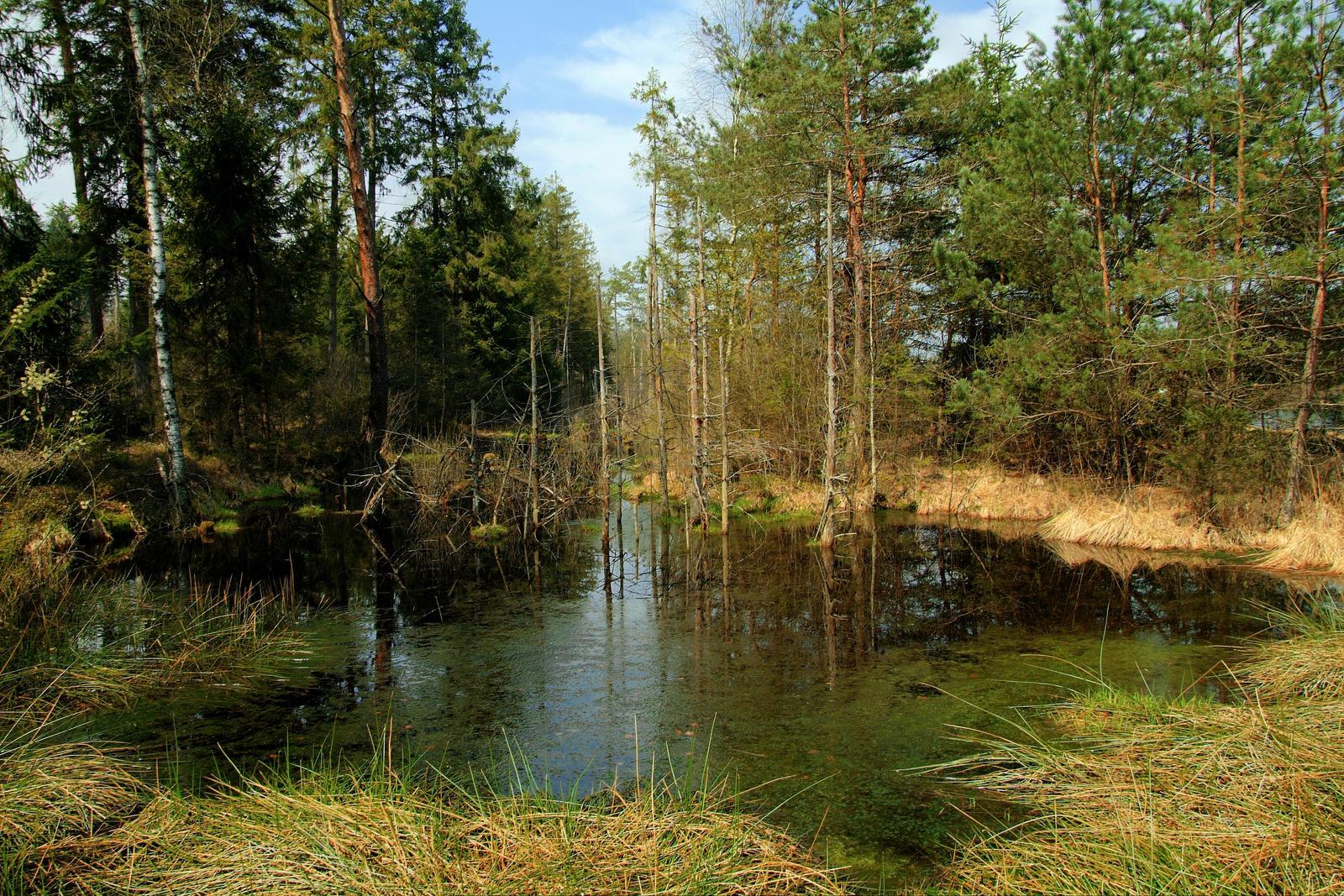 Mudpuddle by Burtn