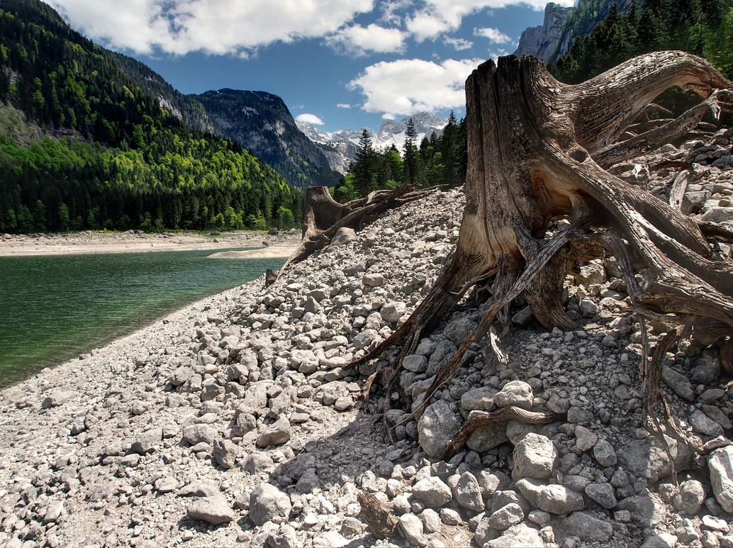Forgotten Trees by Burtn