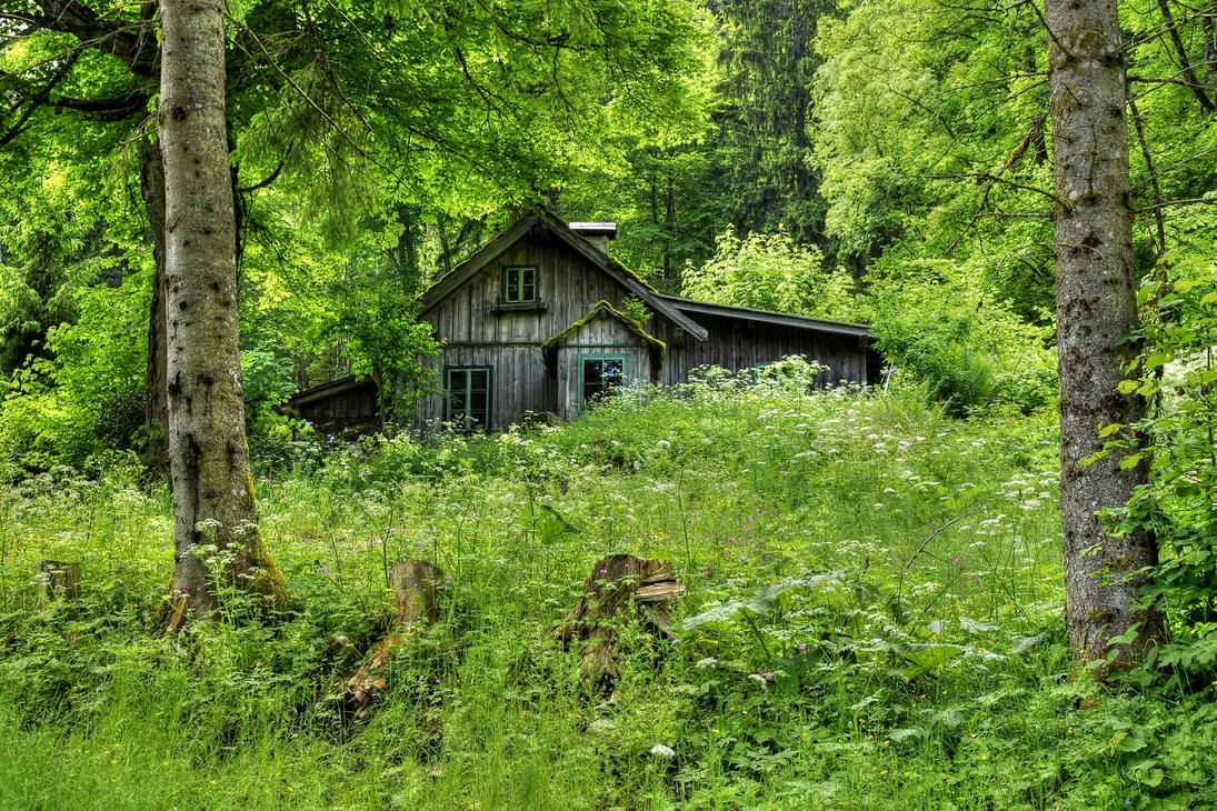 Old Forest Home by Burtn