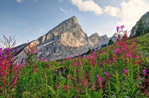 Alpine Vegetation by Burtn