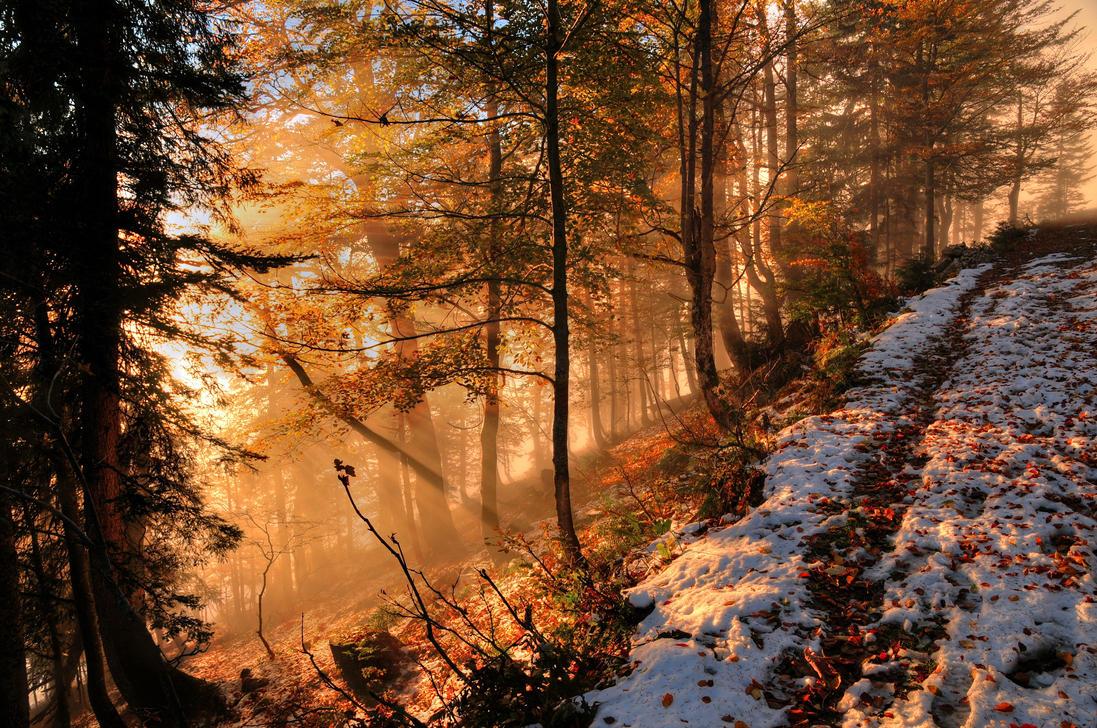 Foggy Autumn Forest 2nd by Burtn