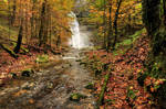 Autumn Forest With Waterfall