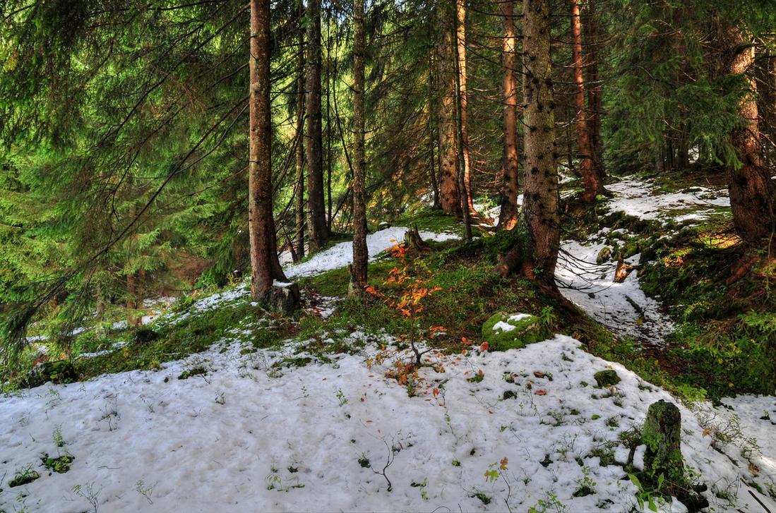 Snowkissed Forest Background by Burtn