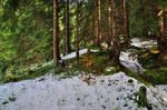 Snowkissed Forest Background