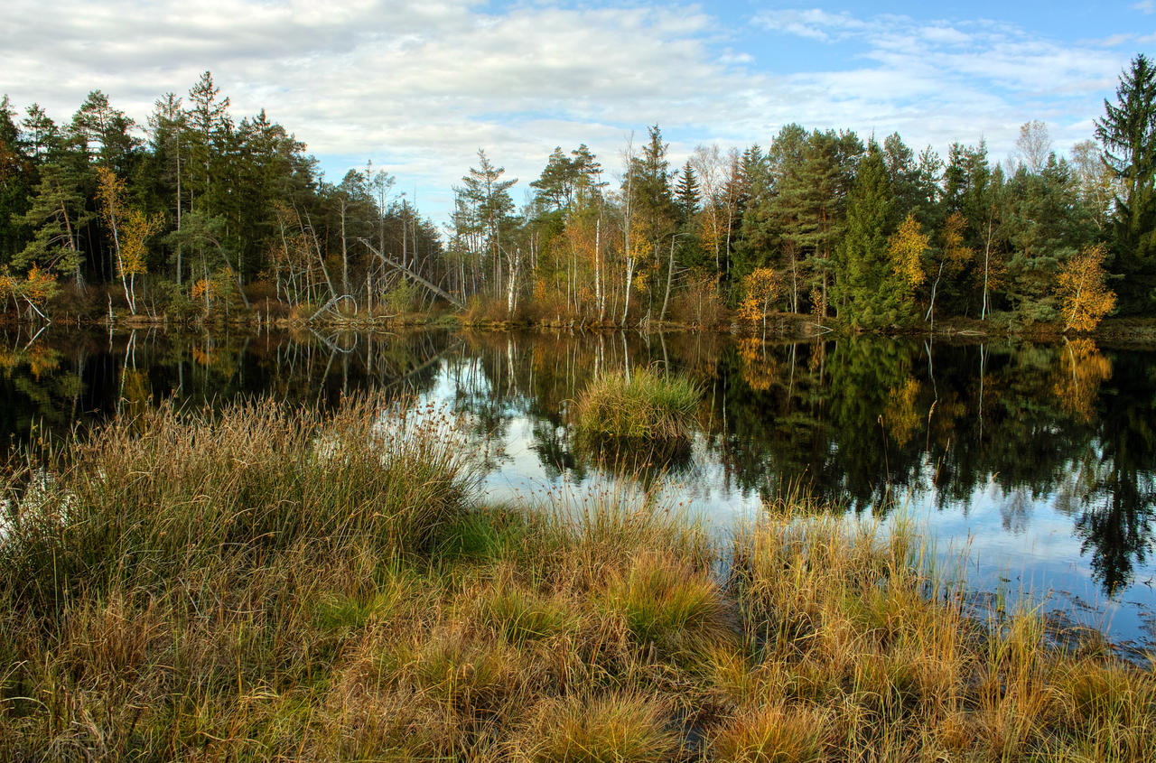 Swamp Background by Burtn