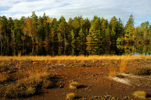 Swamp Background 2nd by Burtn