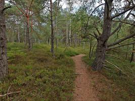 Forest Path Background by Burtn