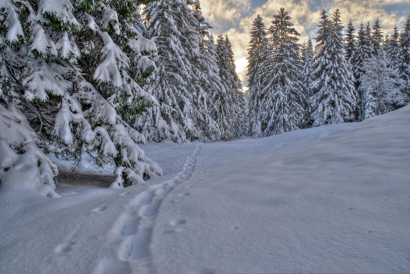 Along That Snowy Path by Burtn