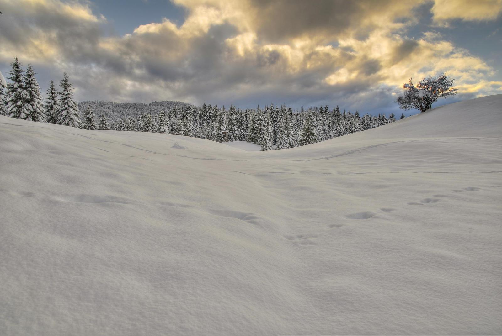 Fields Of White by Burtn