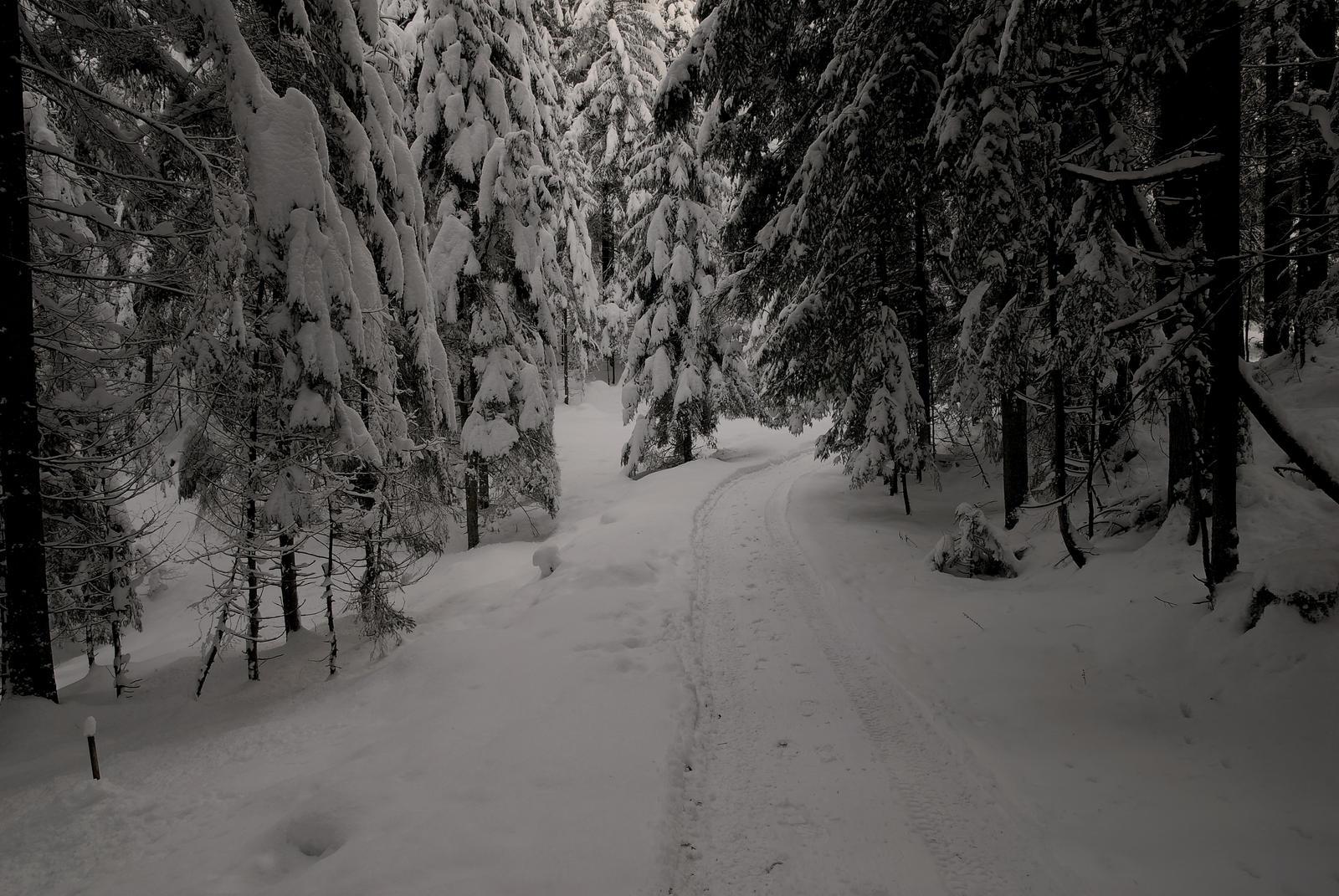 Old Man Winter by Burtn