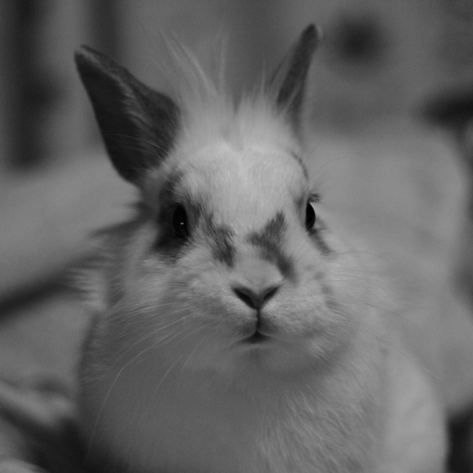 Bunny Portrait by Burtn