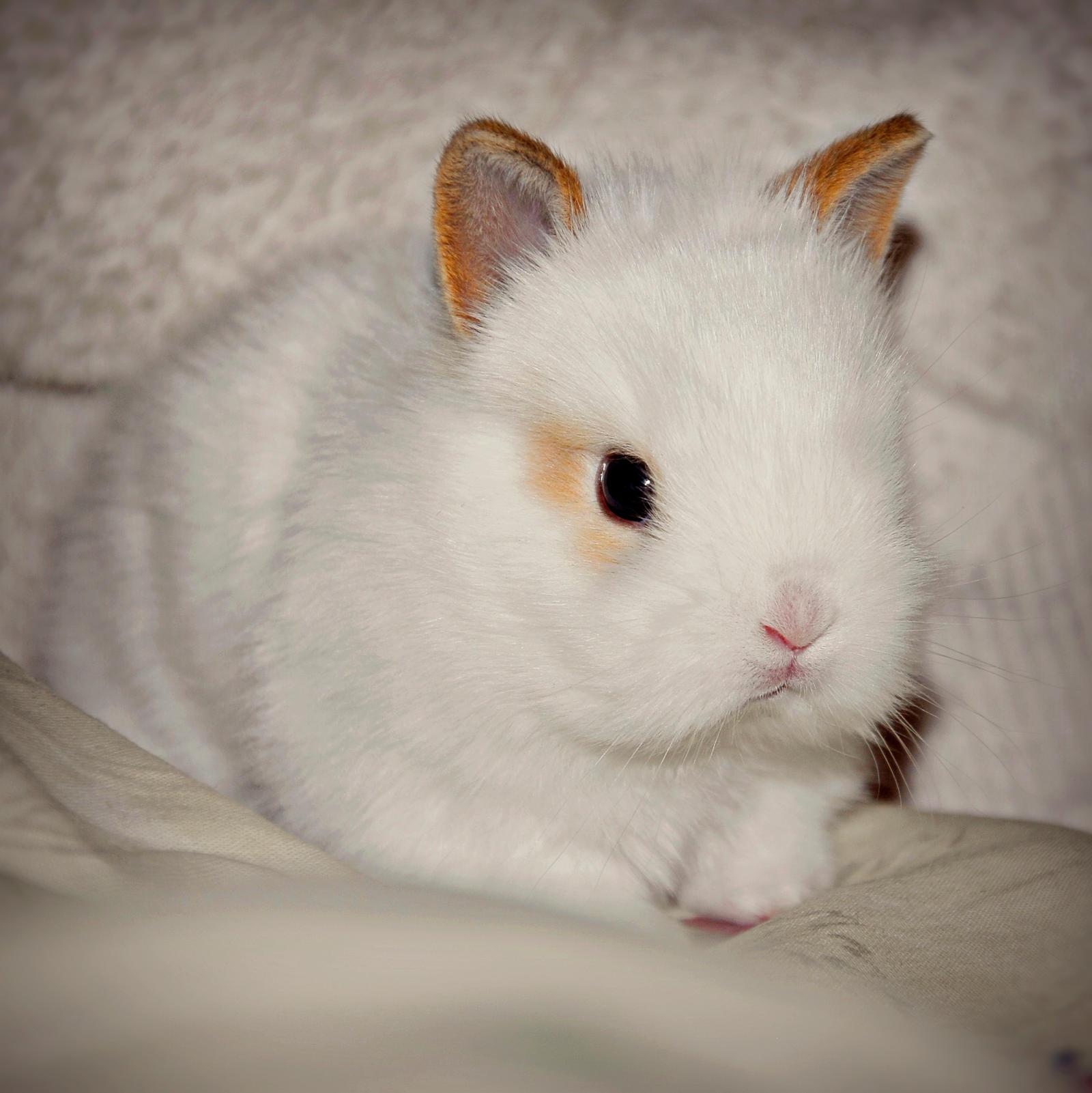 Baby Bunny by Burtn