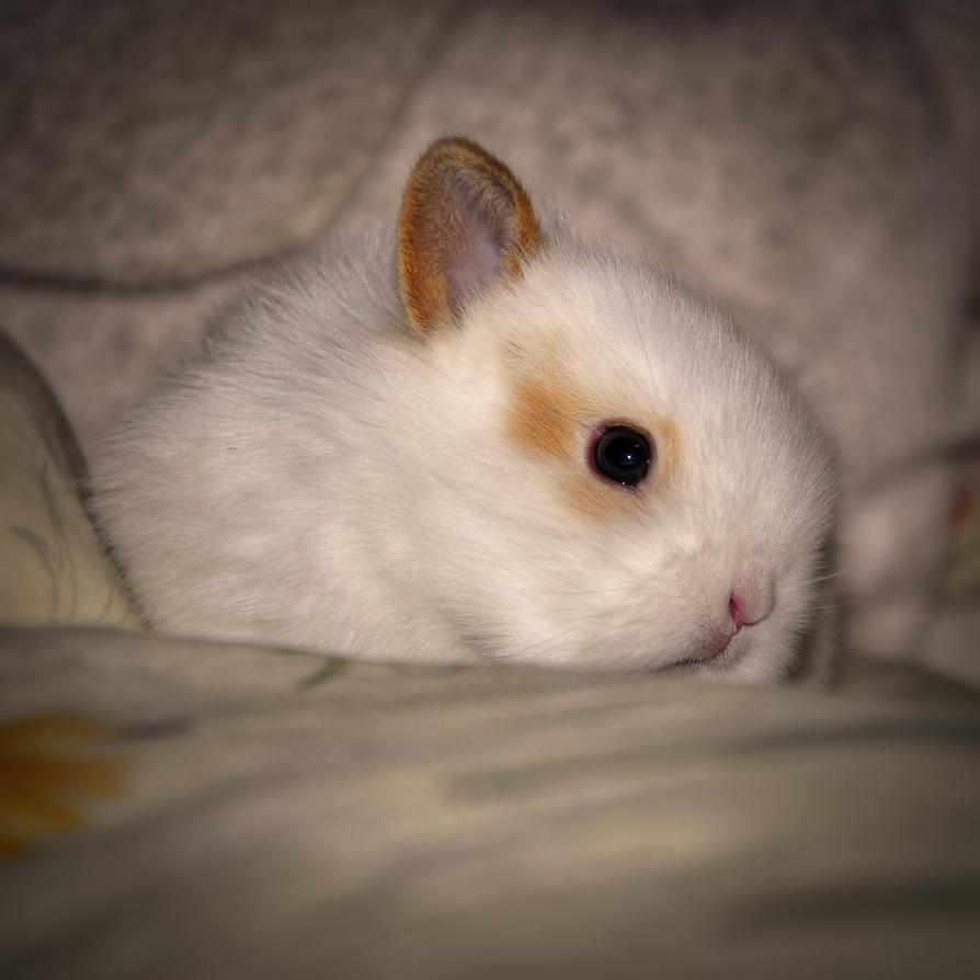 Baby Bunny 2nd by Burtn
