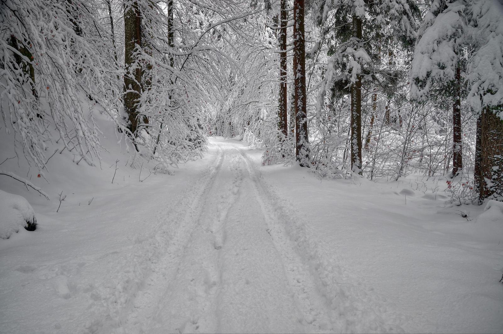 New Snow by Burtn