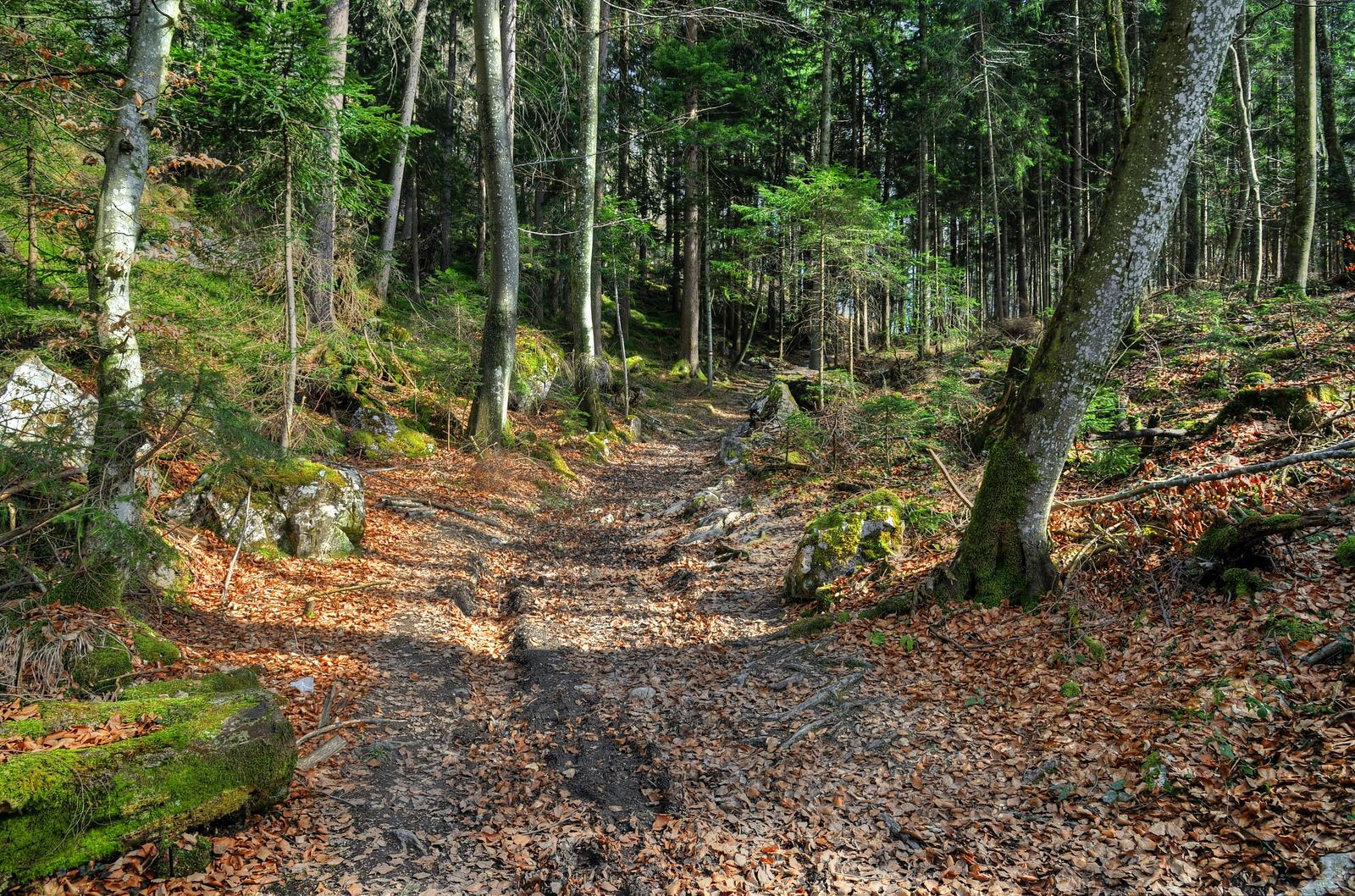 Through The Woods by Burtn