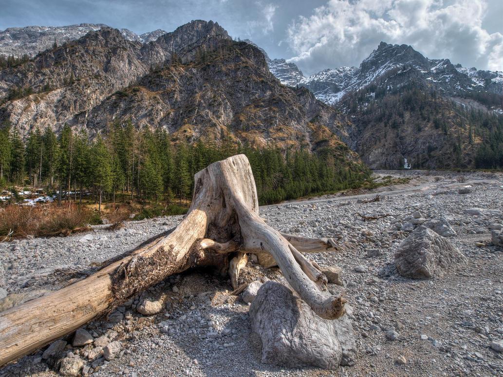 Wild Nature by Burtn