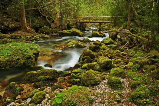 Forest Scene With Bridge