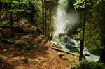 Thundering Forest