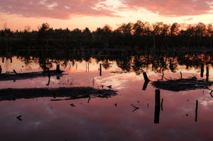 Dead Swamp by Burtn
