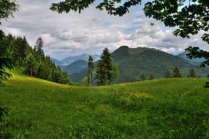 Framed Meadow by Burtn
