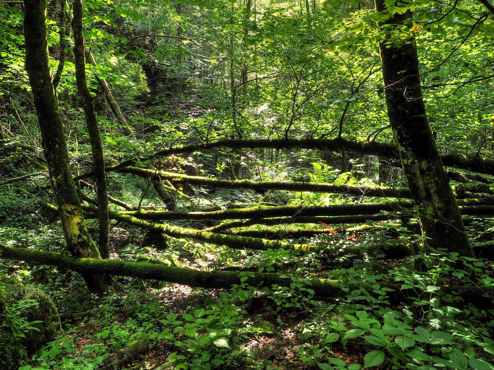 Wild Forest Background by Burtn