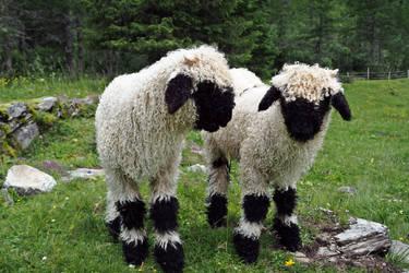 Woolly Companions by Burtn