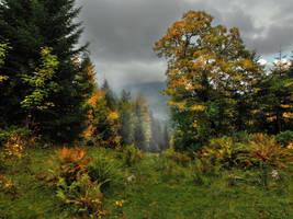 Rainy Fall by Burtn