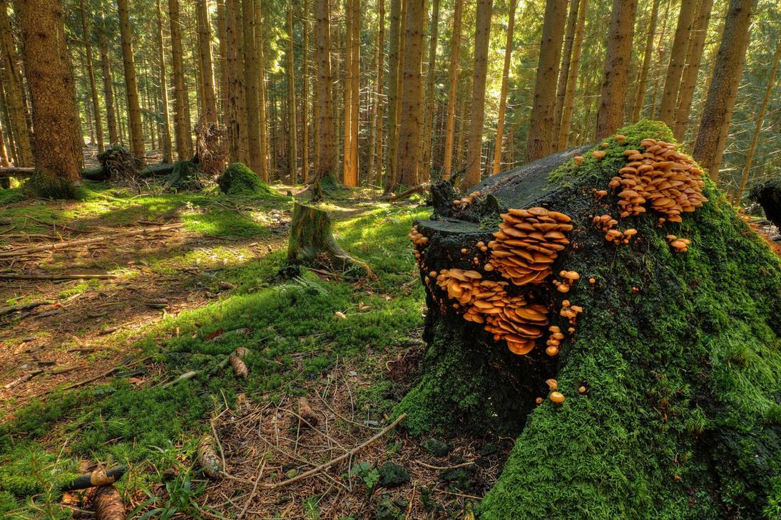 Forest Background by Burtn