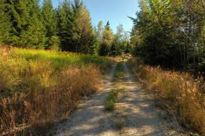 Autumn Walk by Burtn