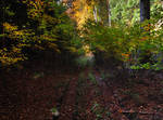 In Autumn Forest