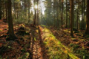 Sunny November Forest by Burtn
