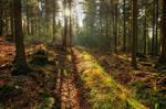 Sunny November Forest