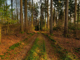 Path Through November Forest by Burtn