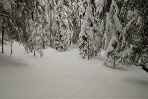 Merry Christmas-Snowy Forest Background by Burtn