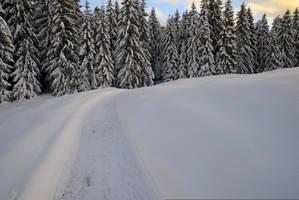 Winter Pathway by Burtn