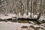 Snowy Forest With River