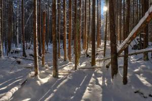 Winter Zauberwald by Burtn