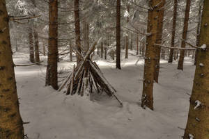 Deep Winter Forest by Burtn