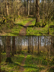 2x Spring Forest Background by Burtn