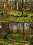 2x Spring Forest Background