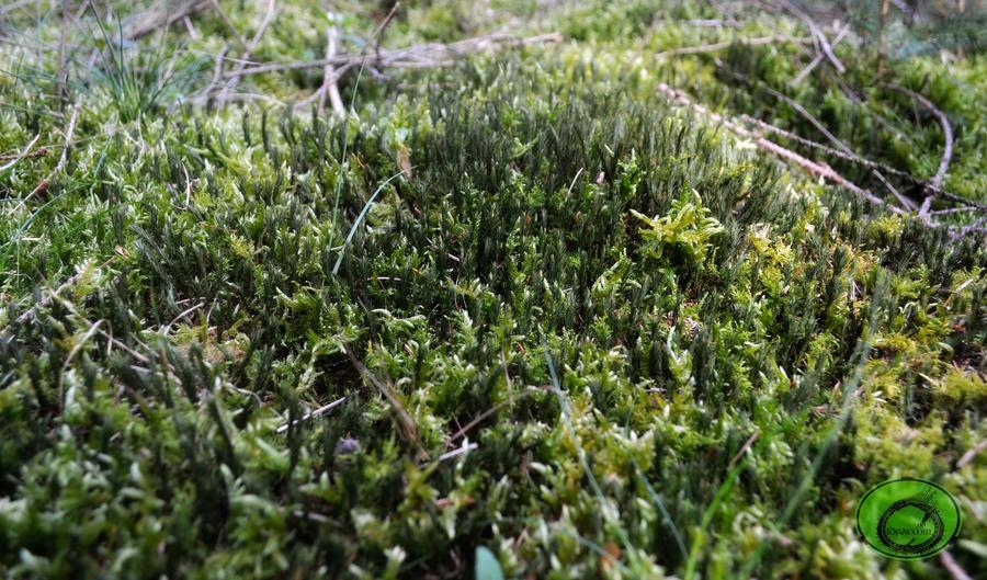 Moss by Idraemir