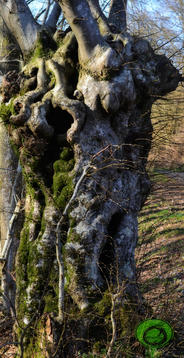 Freaky tree 01 by Idraemir