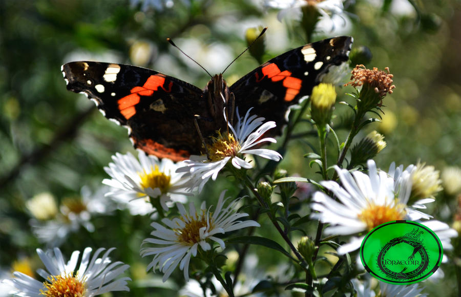 Butterfly 09 by Idraemir