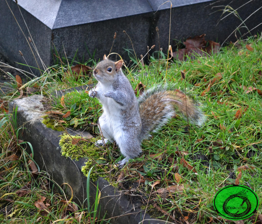The Truncated Squirrel 01 by Idraemir