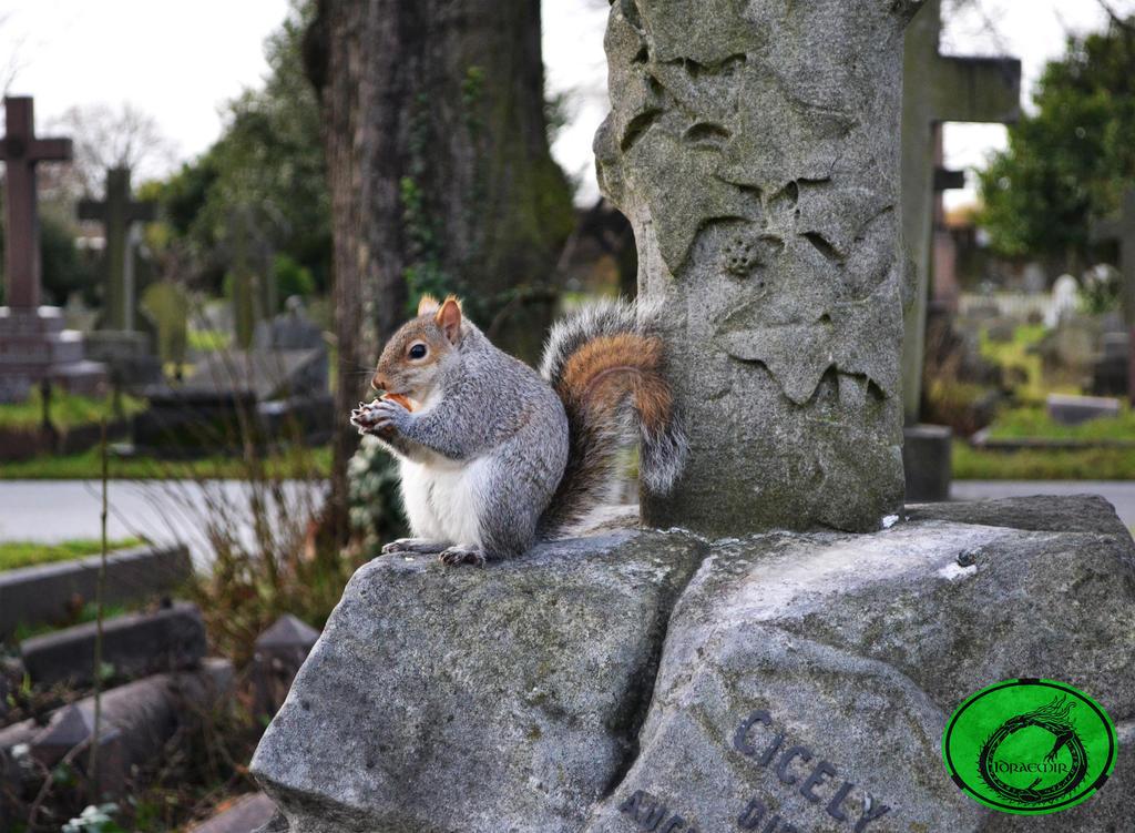 The Truncated Squirrel 02 by Idraemir