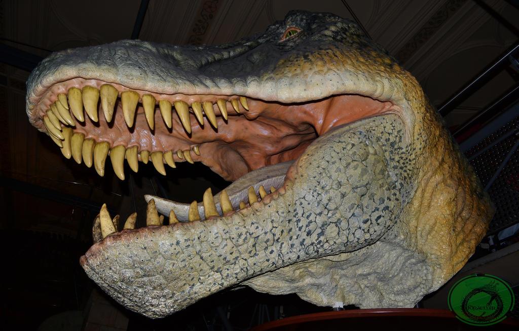 Tyrannosaurus Head by Idraemir