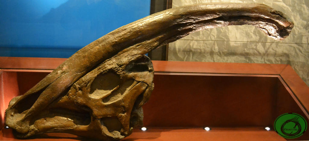 parasaurolophus by Idraemir